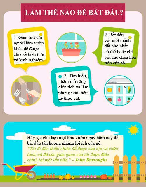 infographic dau lam vuon nhu the nao